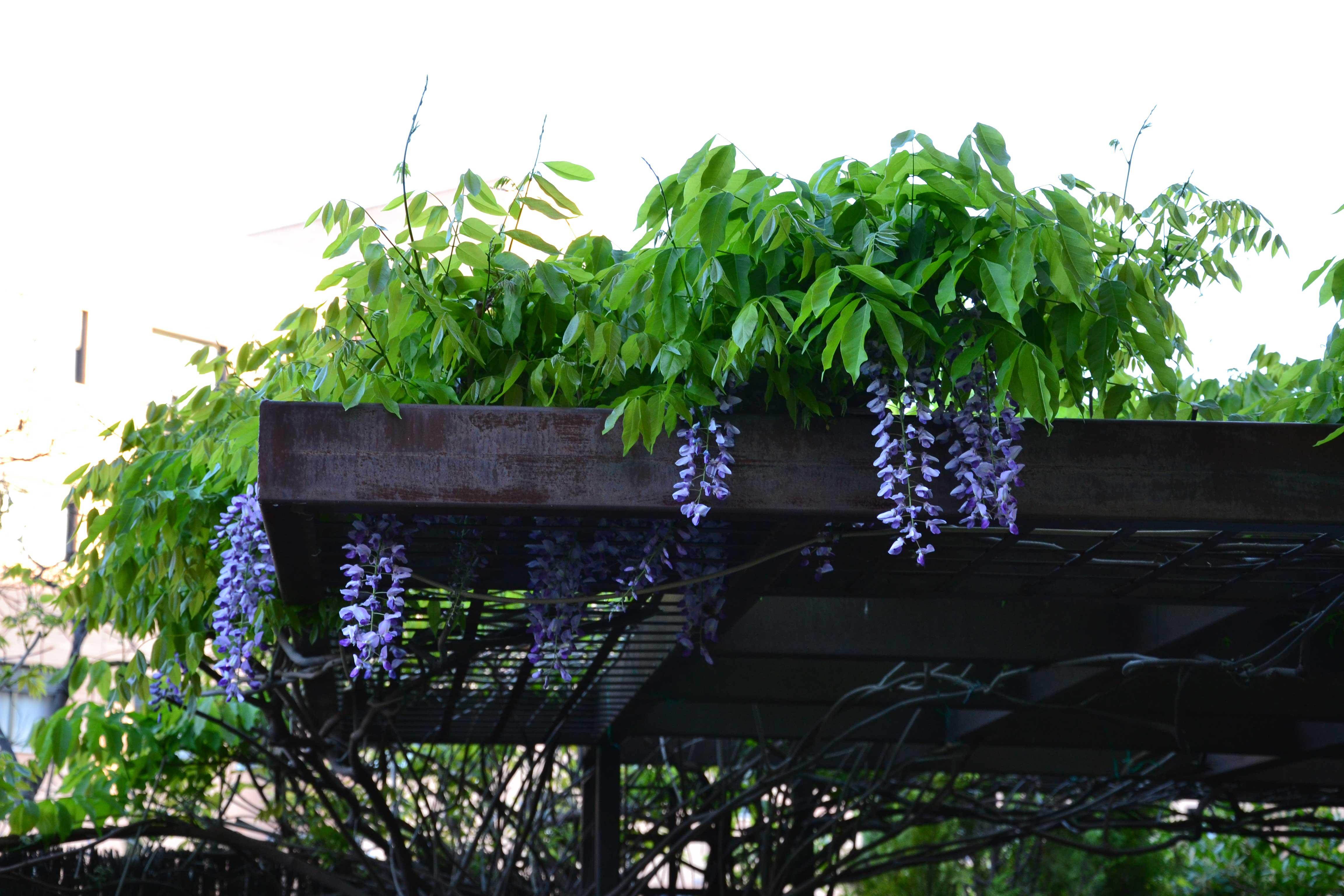Slabon Forja Creativa - Cubierta vegetal